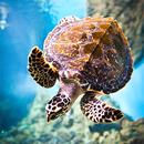 Abenteuer Schildkröte
