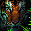 Dschungel-Nächte  - Tierpark Hagenbeck