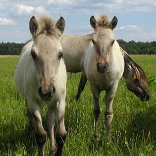 Wildpferdgehege und Haustierpark