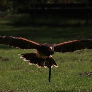 Auf Tuchfühlung mit Greifvögeln