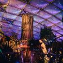 Zoo Leipzig: Magisches Tropenleuchten im Gondwanaland