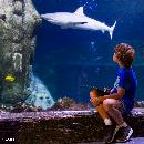 Deutschlands größte Hai-Vielfalt