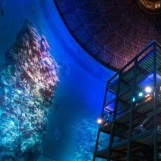 GREAT BARRIER REEF - Wunderwelt Korallenriff