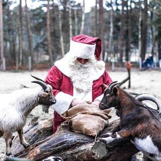 Tierische Weihnacht im Wildpark Müden