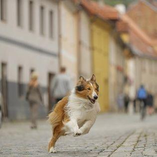 """Happy Family: """"Lassie - Eine abenteuerliche Reise"""""""