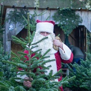 Tierische Weihnacht mit Tannenbaumverkauf